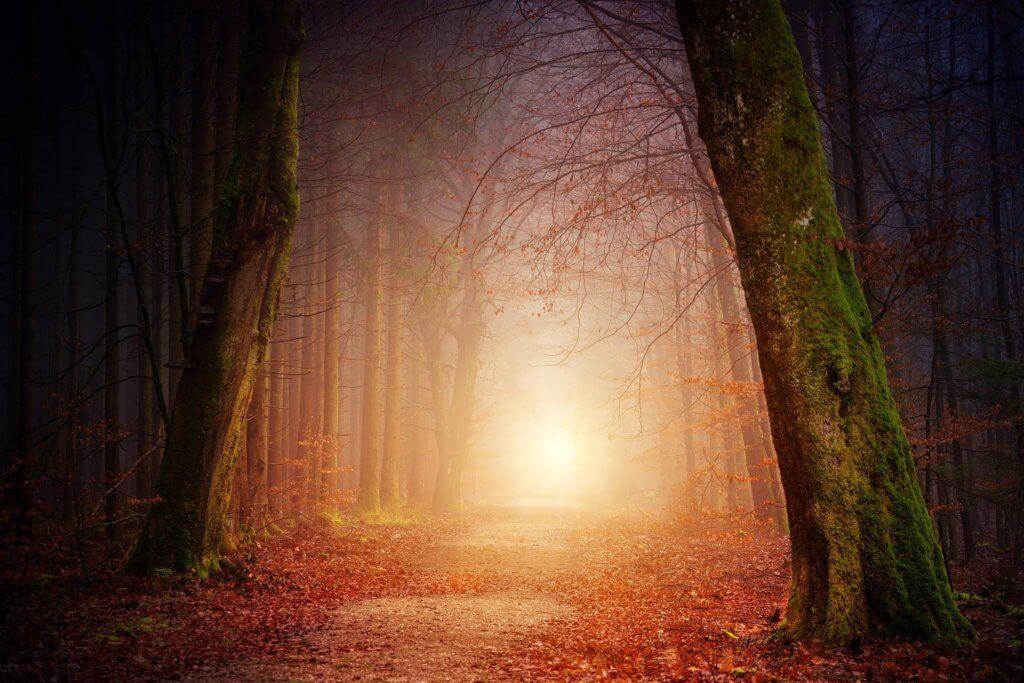 wunderschöner Wald, im Einklang mit der innere Mitte